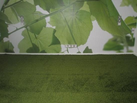 trap en slaapkamer met tapijt